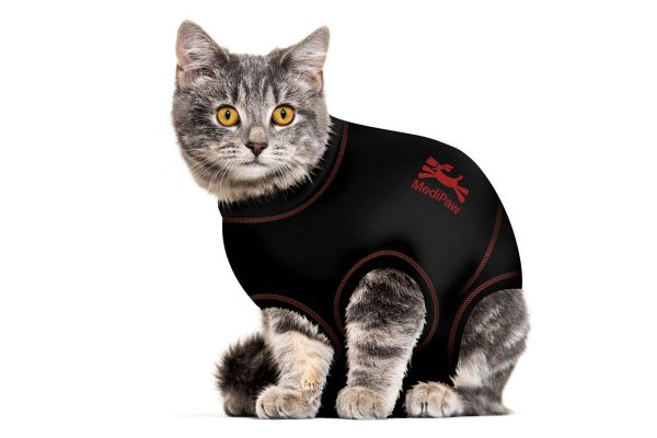 cat-suit-carousel-image-2
