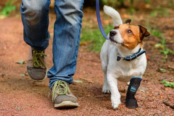 rugged-x-boot-dog-leash-1